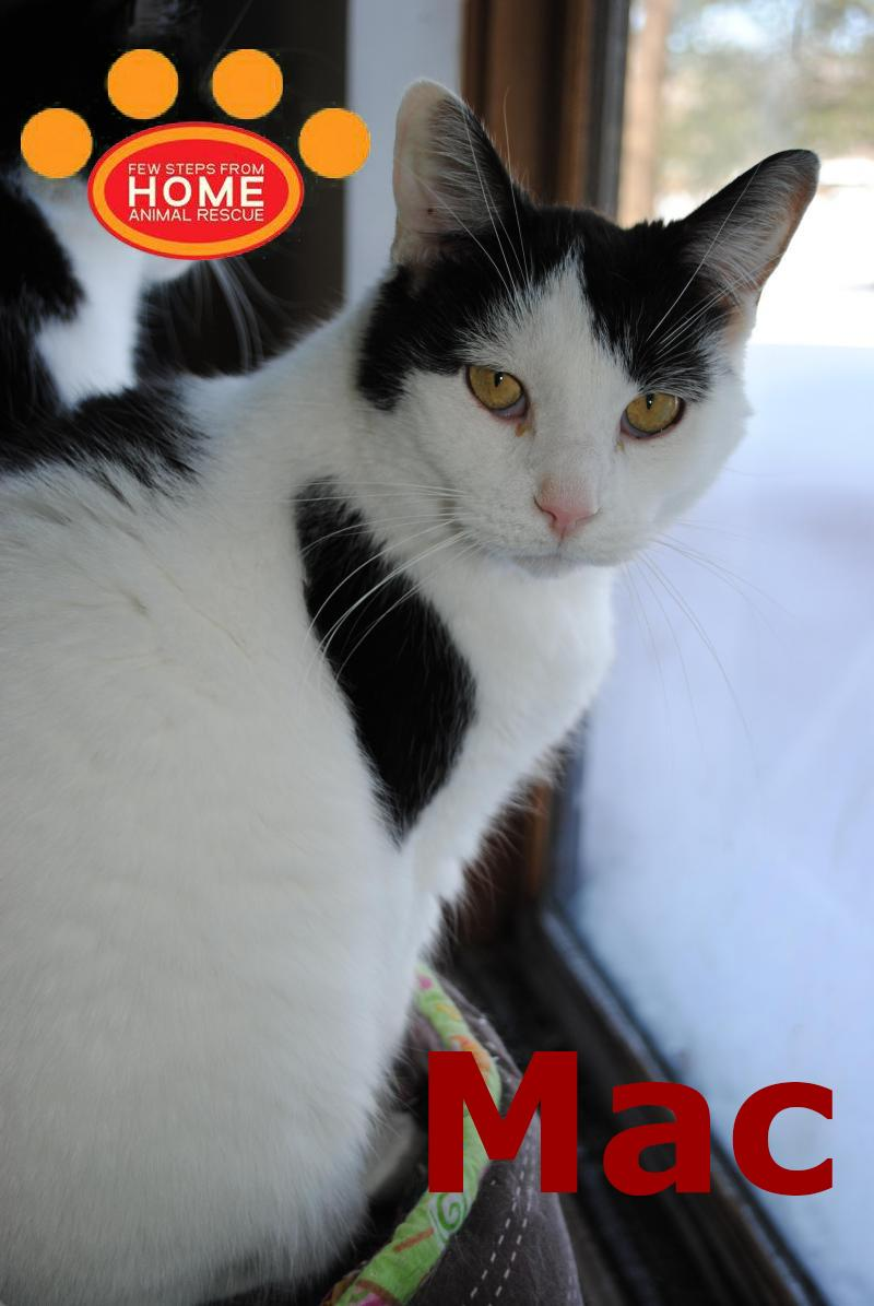 Cats For Adoption Page 3 - Few Steps From Home Animal Rescue