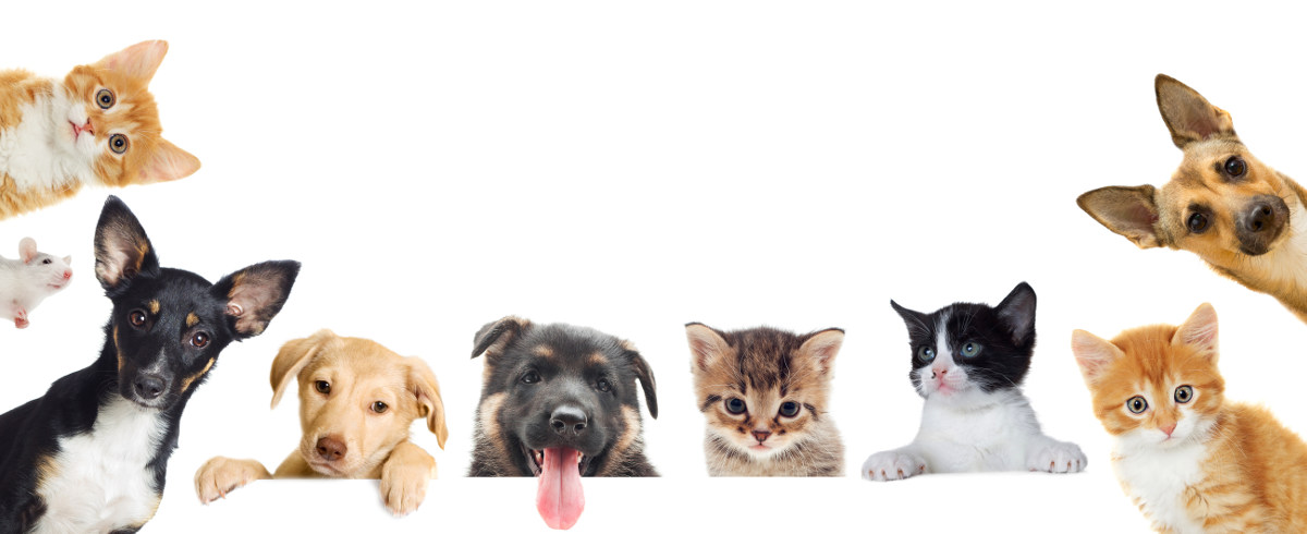 image-823831-dogs-cats-banner-8f14e.jpg